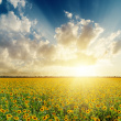stock-photo-33581722-cloudy-sunset-over-field-with-sunflowers